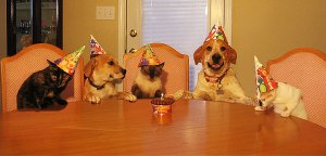 dogs and cats get their birthday party on