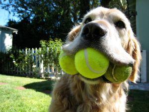 3-ball-dog